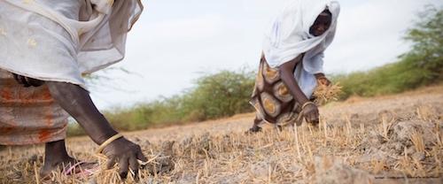 Petizione su accordo di partenariato economico UE-Africa-Occidentale